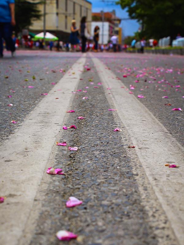 Маслодайната роза – нашето богатство 9