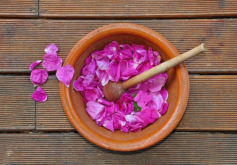 Маслодайната роза – нашето богатство 8