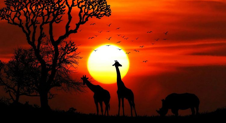 7 типа места, които може да видите в Африка