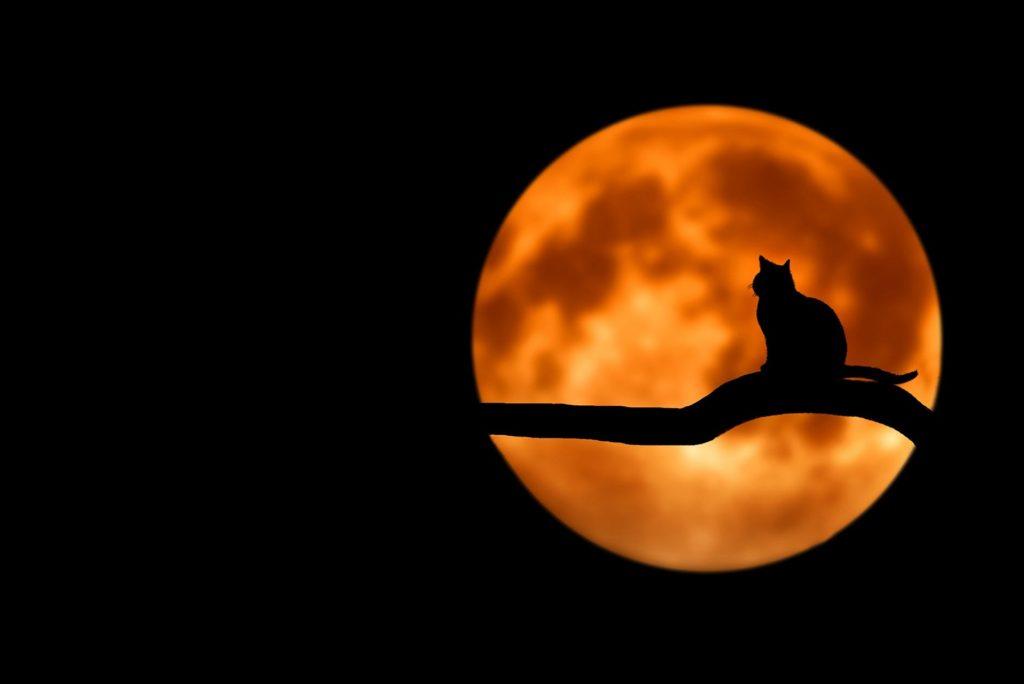 В навечерието на Хелоуин 1
