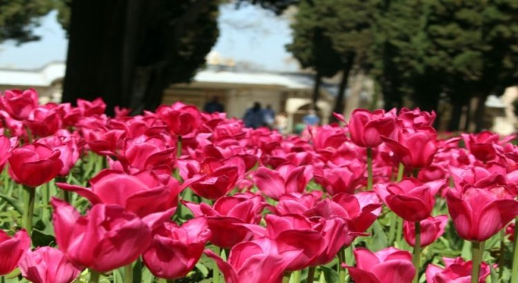 Международен фестивал на лалетата в Истанбул