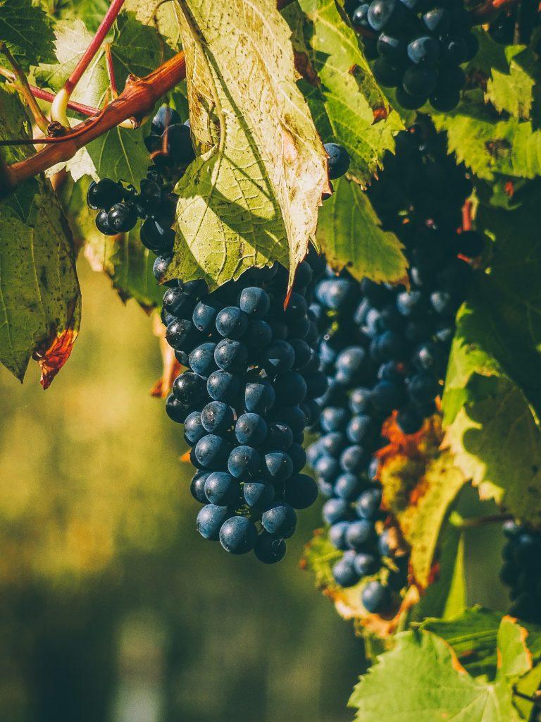 Италианското вино – гордостта на нацията 1