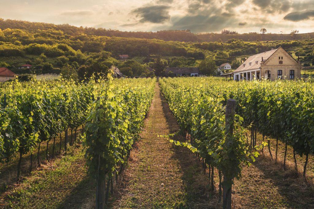 Италианското вино – гордостта на нацията 2
